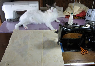 cat Supervisor helping me sew
