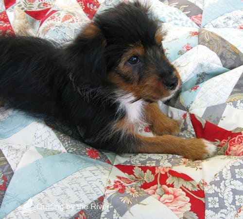 Pets on Quilts