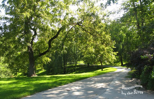 Beautiful driveway in the country
