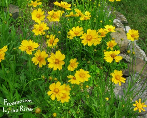 Flowers at Freemotion by the River