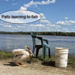 Pelican fishing and blog hop
