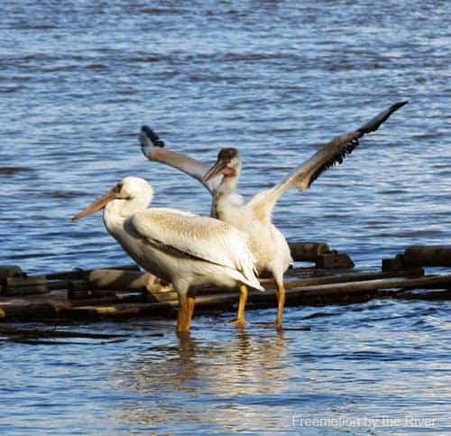 Pelly and friend