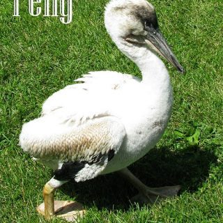 Pelly the Pelican News!!