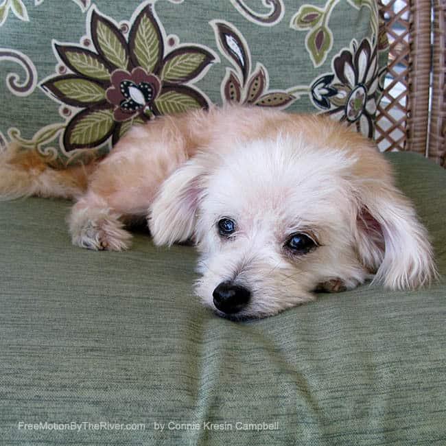 Little Sadie the dog