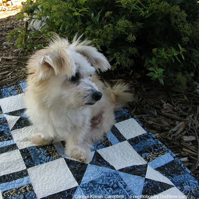 Photo of dog on a quilt looking away from the camera