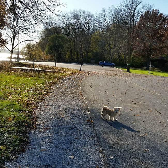 Sadie walking at Shady Creek