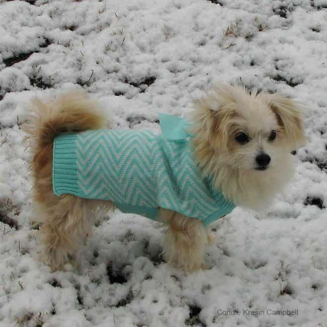 Sadie first snow