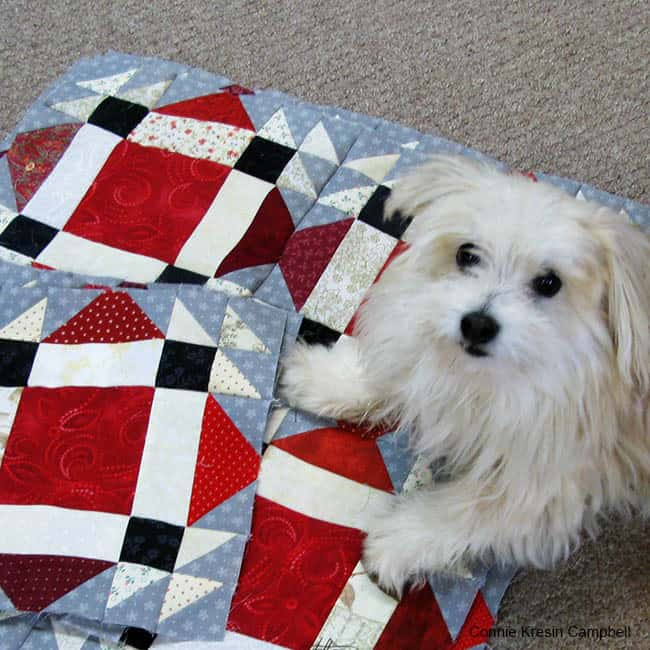 Design wall full Design floor Cute little dog on quilt blocks helping with blocks