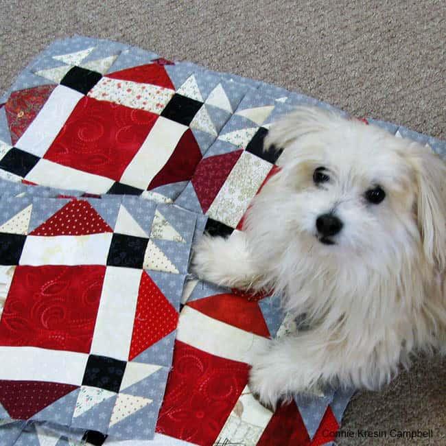Design wall full Design floor Cute little dog on quilt blocks helping with blocks