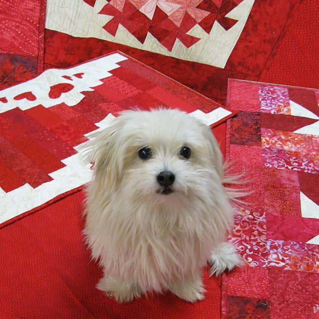 Sadie on quilts Happy Valentine Day