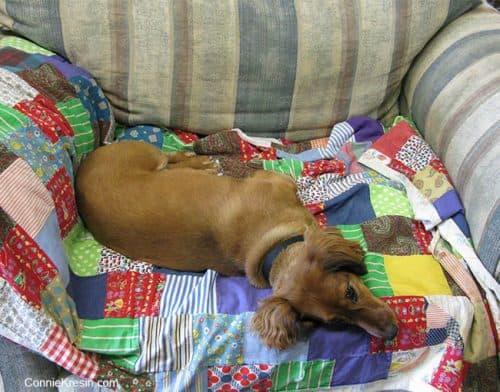 Tasha on old quilt