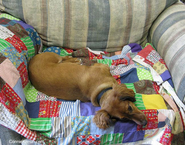 Tasha on old quilt