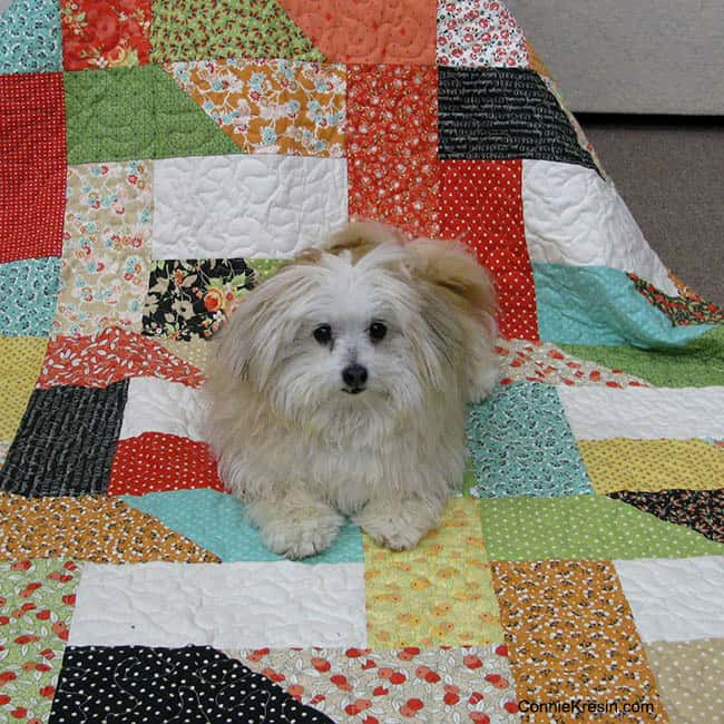 Dovetail quilt with Sadie on it