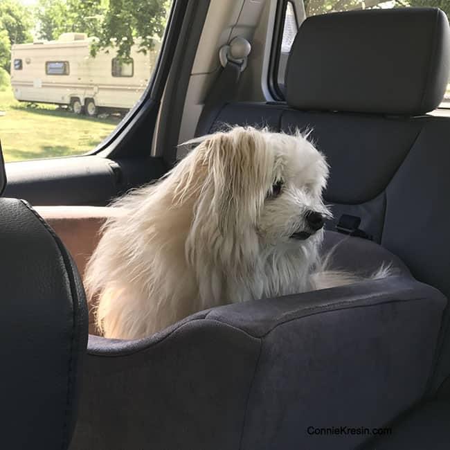 Sadie going to groomer