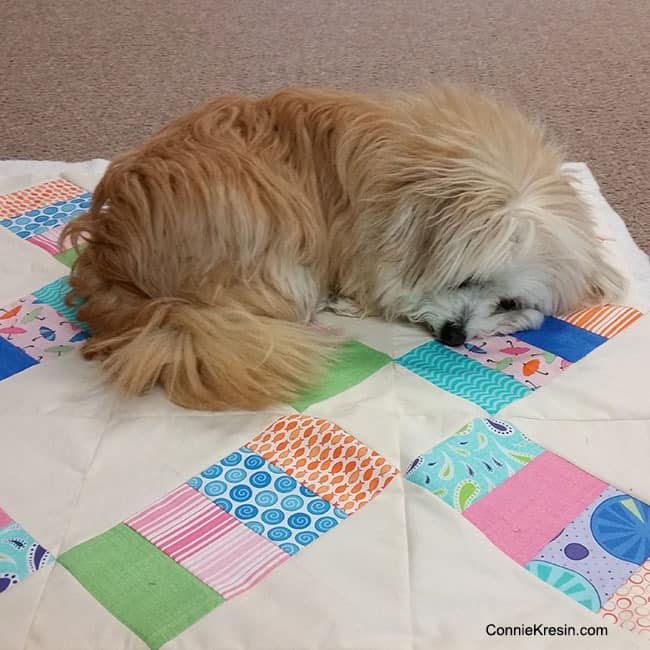Sadie on quilt before haircut