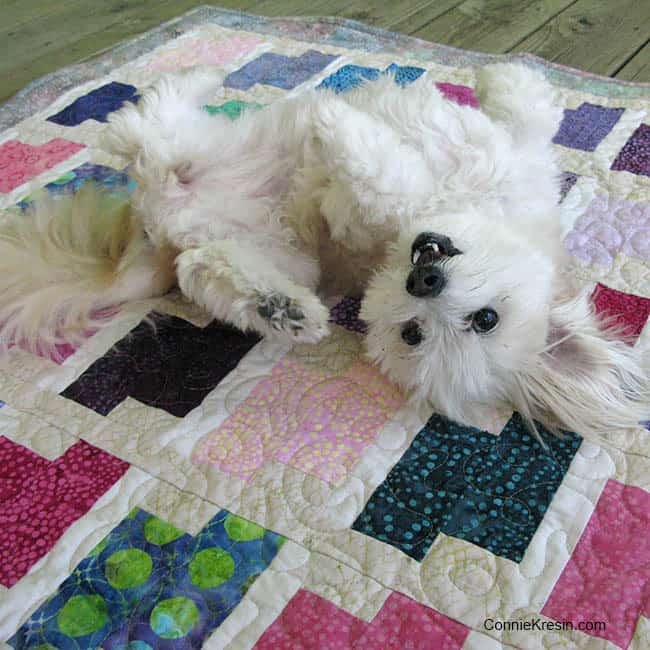 Dog-on-quilt-funny