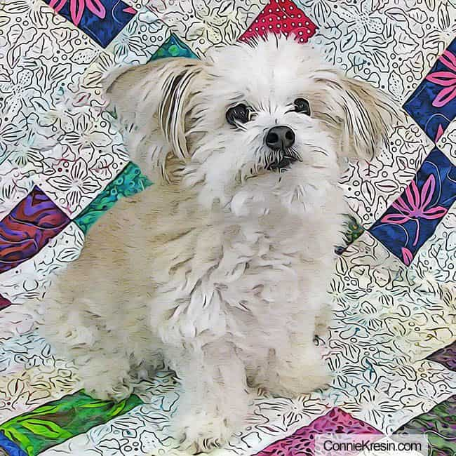 photo of Sadie the dog on the quilt photo manipulated with photoshop