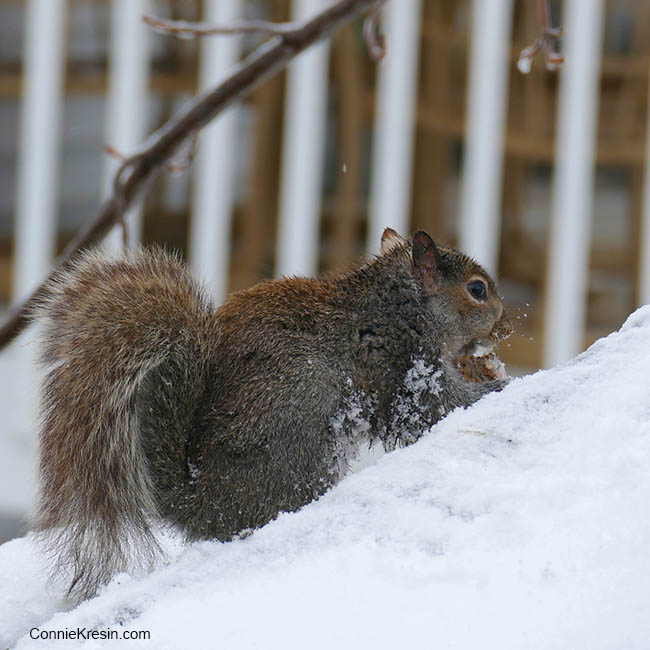 Squirrel eating on the deck