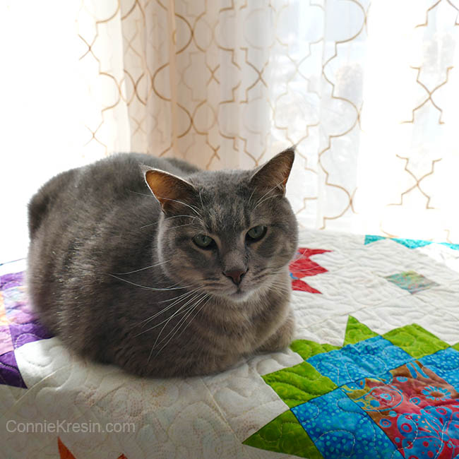 Vintage Reimagined quilt project Maple Star quilt with Bandit the cat on it
