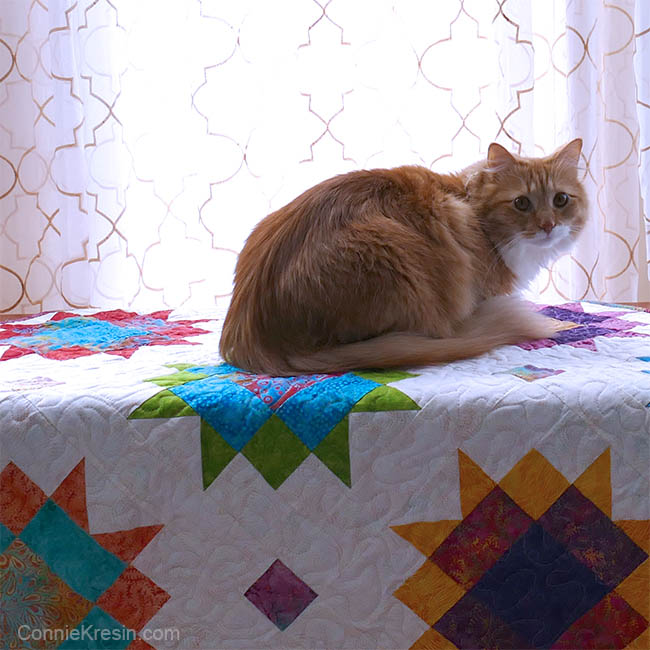 Vintage Reimagined quilt project Maple Star quilt with Puff the cat on it