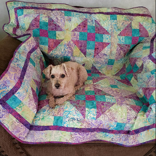 Mickey the poodle on the Luna baby quilt