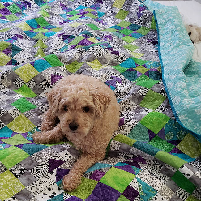 two dogs on the bed