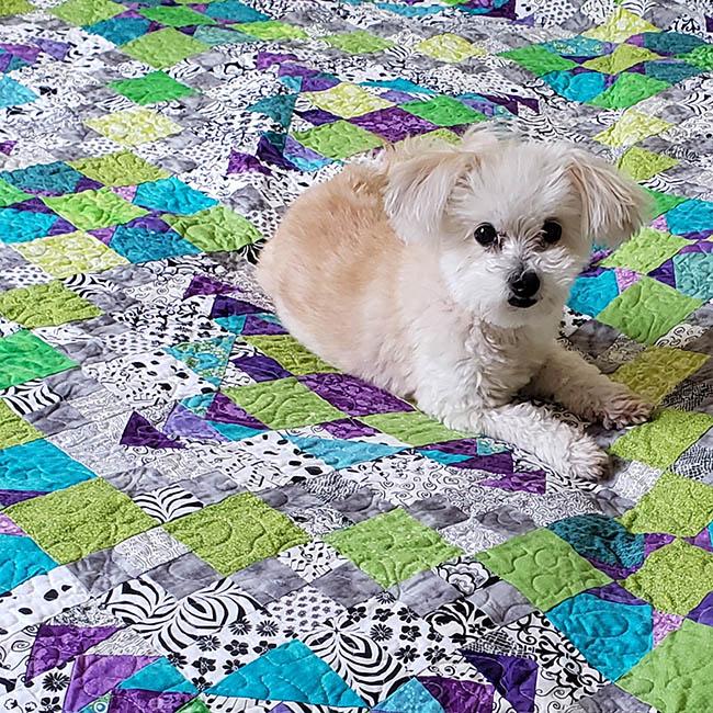 Sadie on the bed