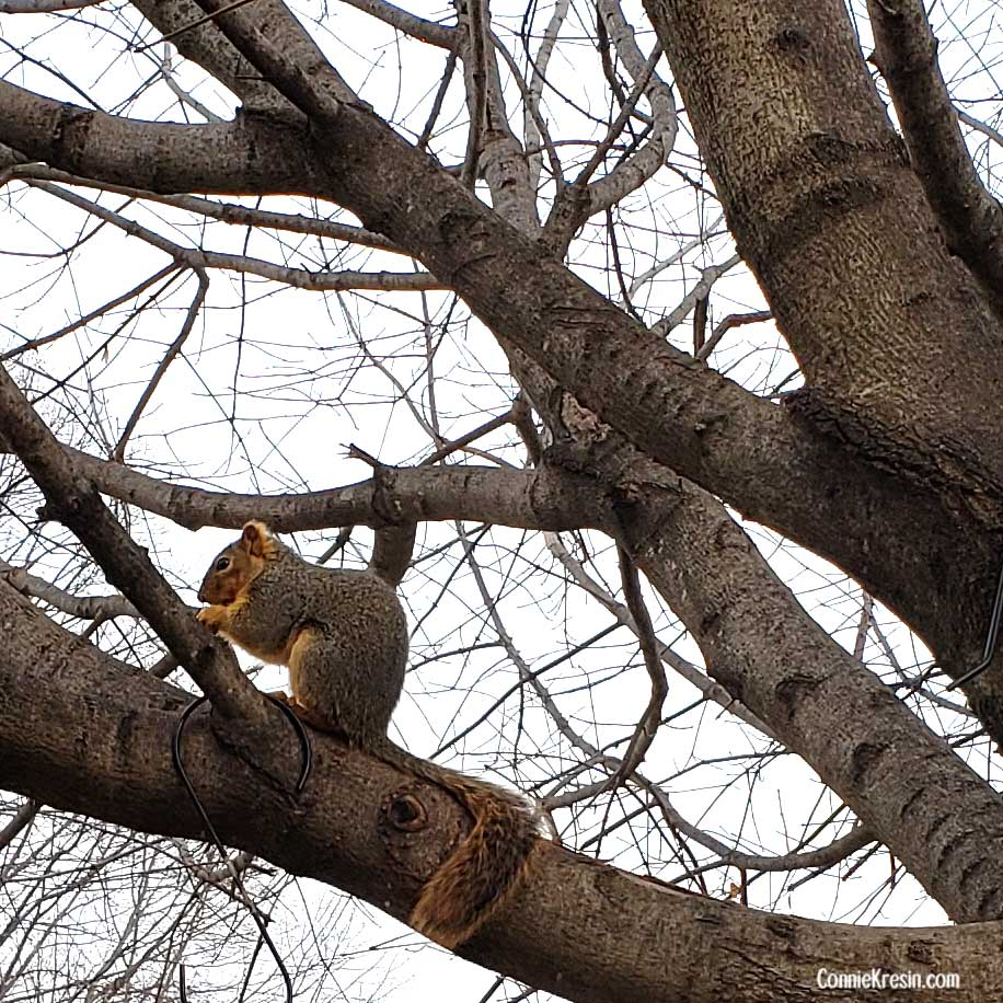 Squirrel in the tree eating