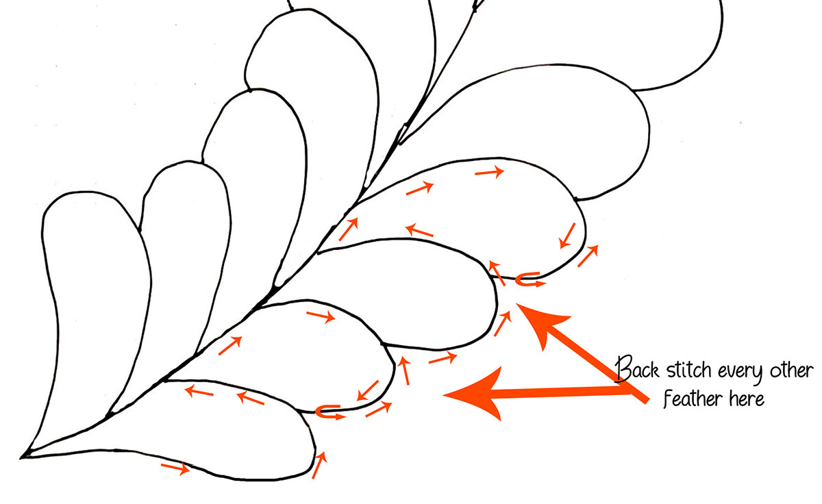 Diagram of feather