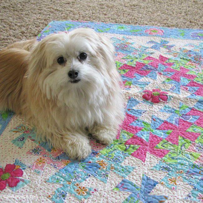Sadie the dog on baby quilt