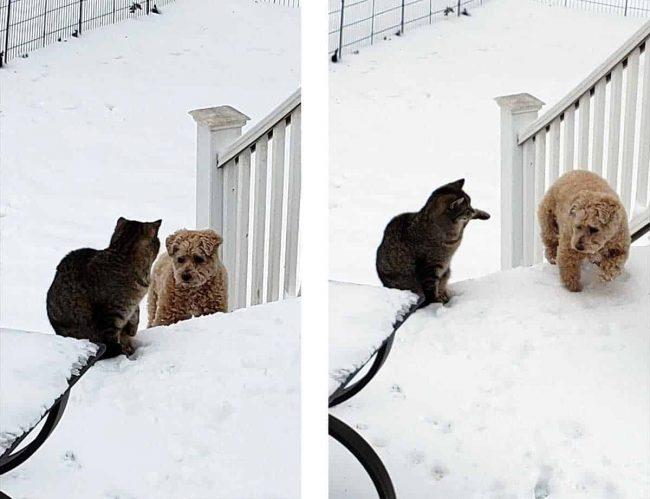 Cat batting at the dog