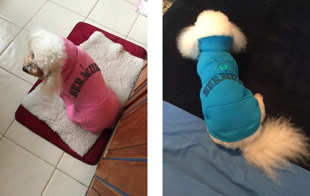 Miriam made dog coats from sweatshirts