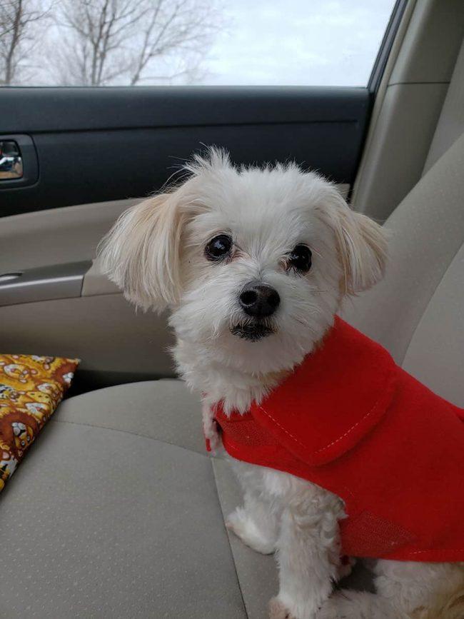 Miss Sadie the dog