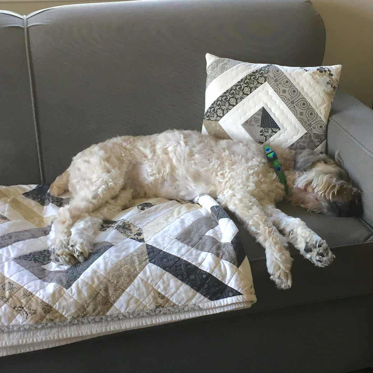 Jack on couch with the petunia strings quilt