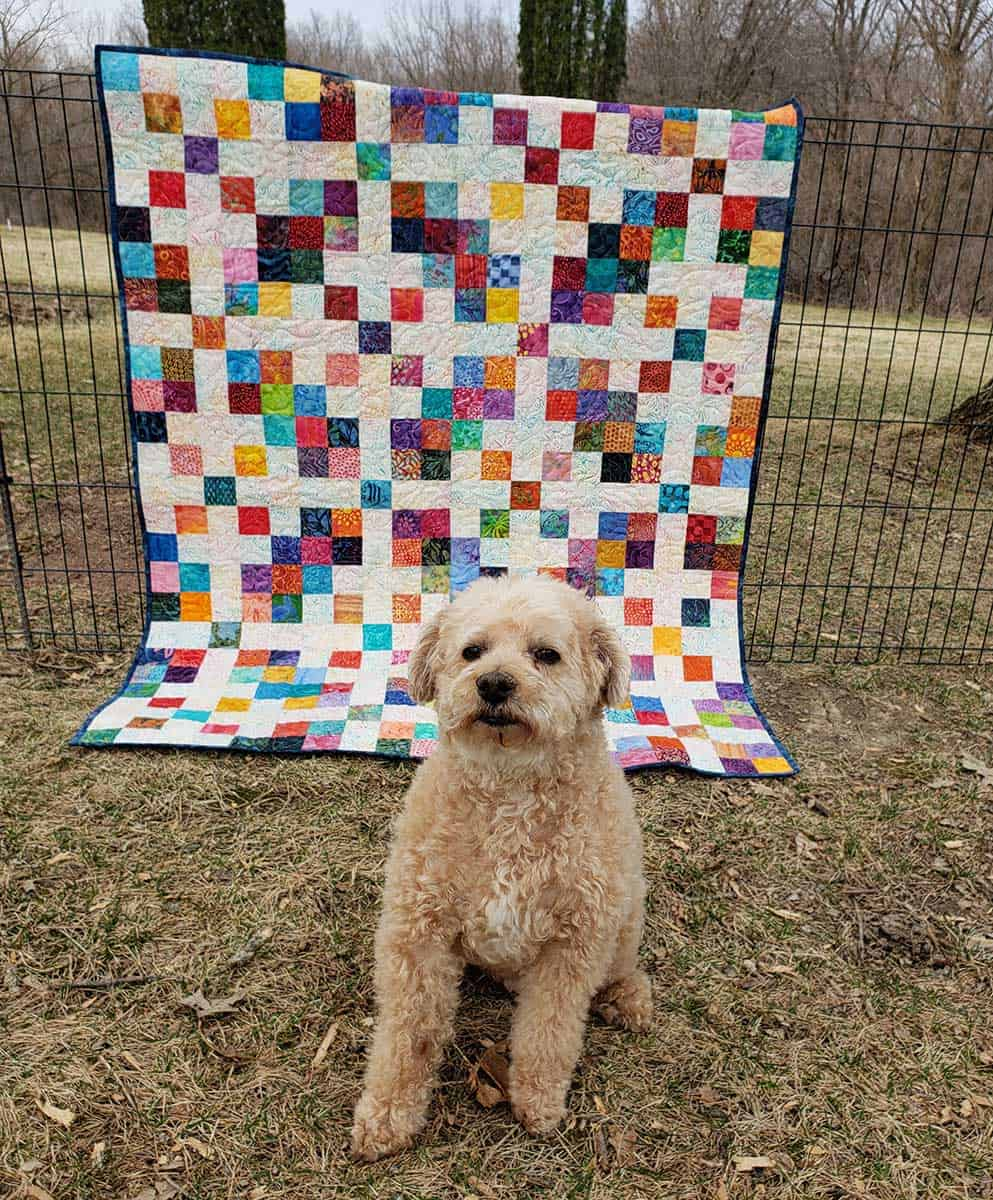 Scrappy Block quilt with Mr. Mickey the dog